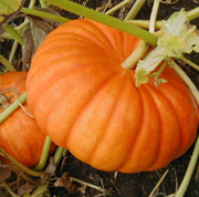 October Monthly Garden Tips