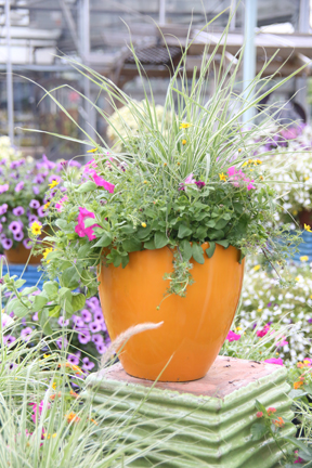 spring_container_2