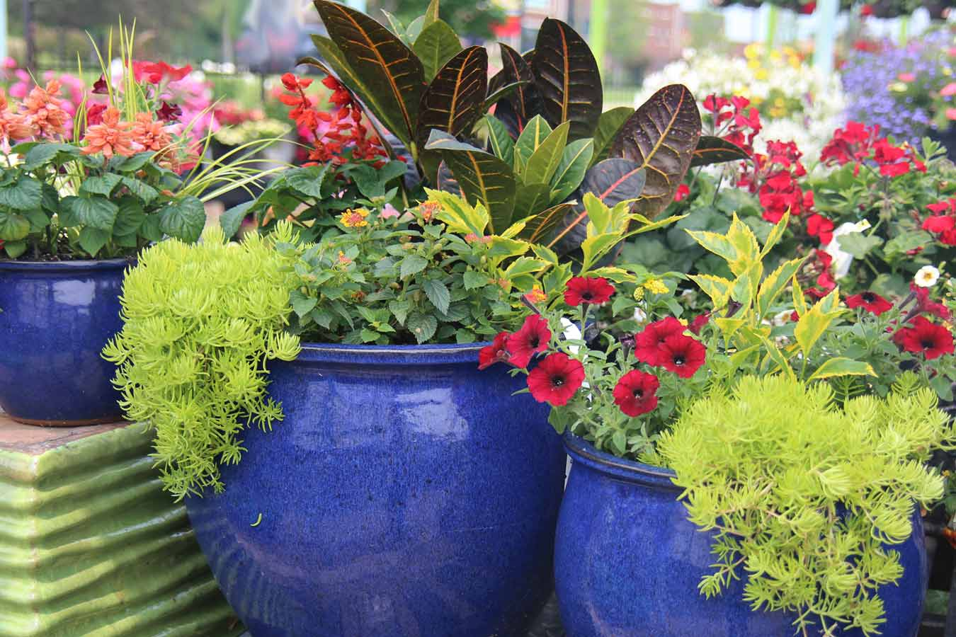 spring_container_4