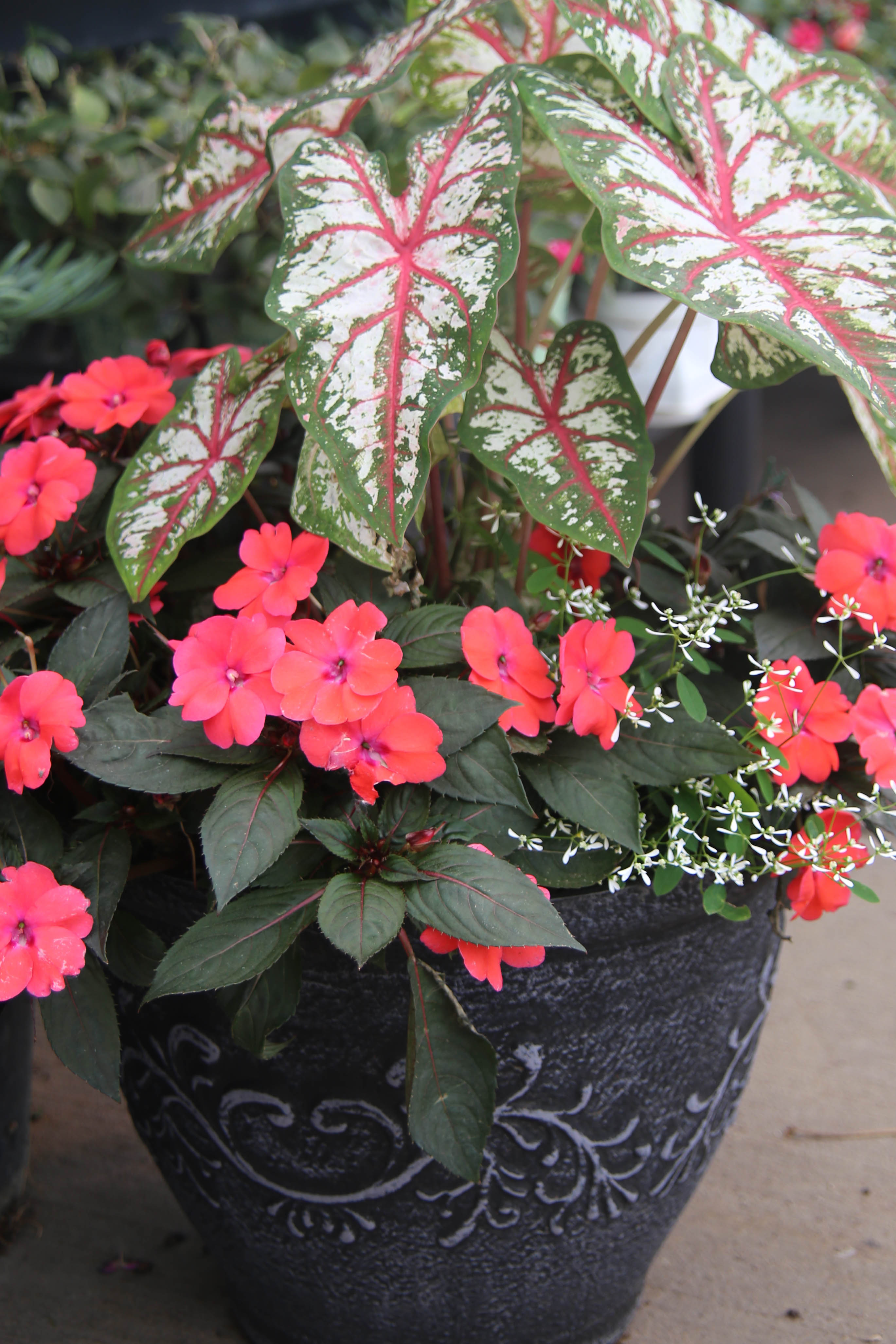 spring_container_7