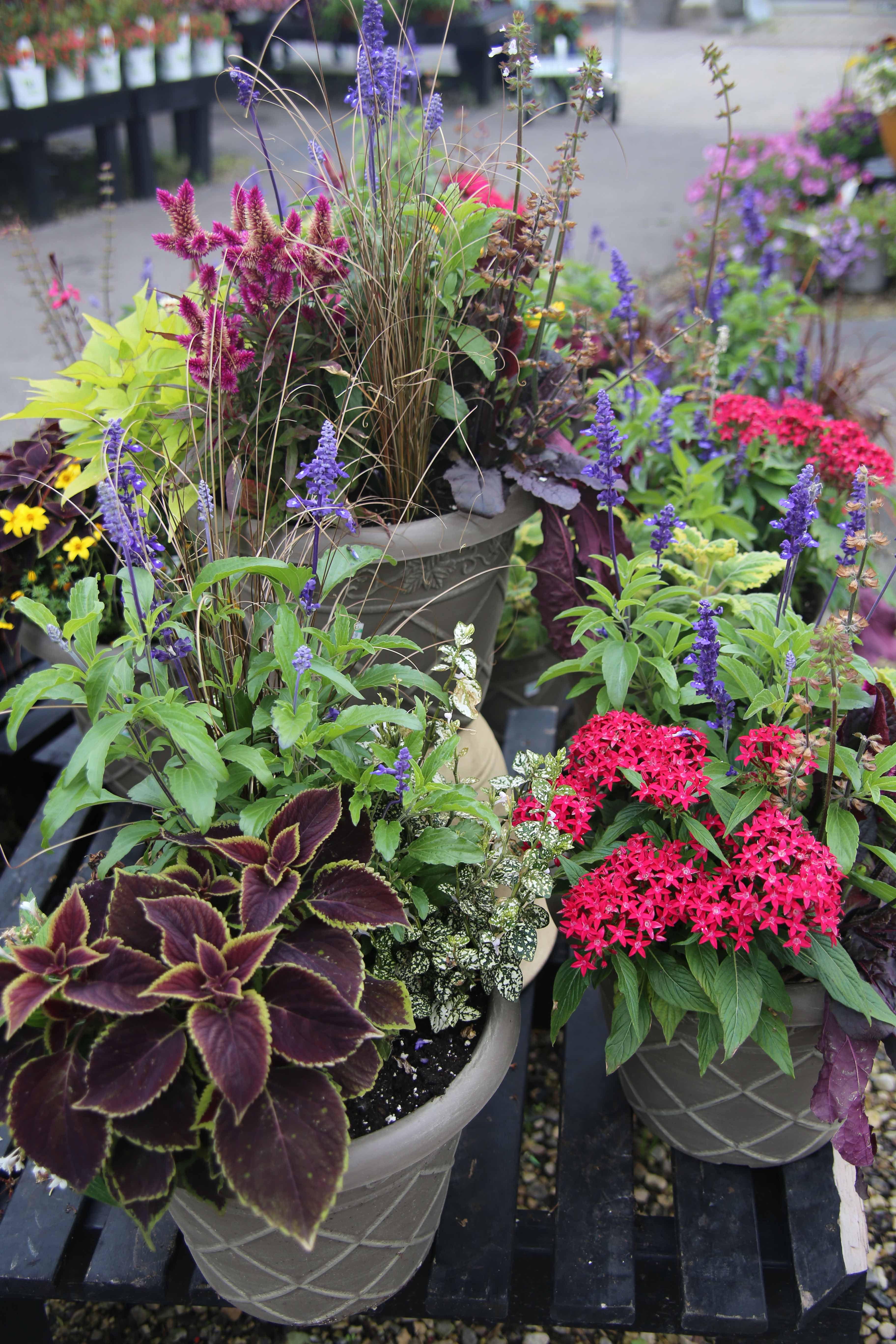 spring_container_9